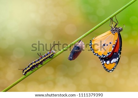 Differing stages of life from caterpillar to cocoon to butterfly #1111379390