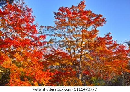 Autumn leaves of Arashiyama in Kyoto #1111470779
