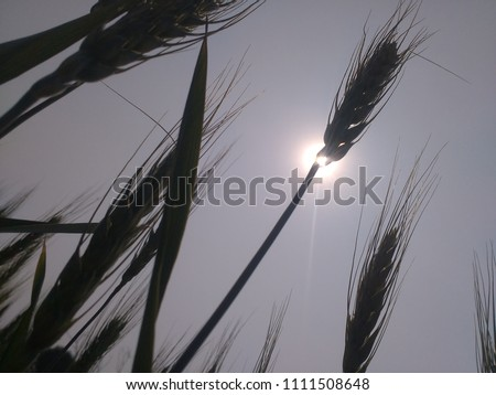 Whet back side sun to shoot picture with kisan Borkar #1111508648