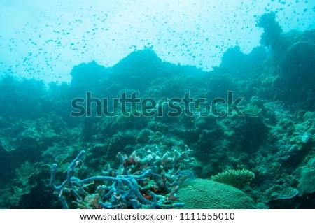 Deep blue coral reef underwater, Moalboal, Philippines. #1111555010