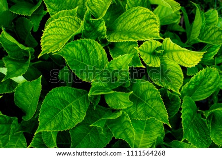 Lush greenery foliage closeup. Top view. #1111564268
