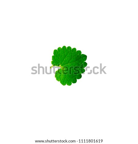 green leaves isolated on white background #1111801619