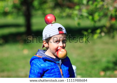 Very cute boy has fun in apple orchard, during harvest period. Happy child picking apples during autumn festival. Little kid playing with apples in tree orchard. Conceptual picture for organic fruits.