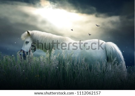 Photo of small white pony in grass with dramatic sky
