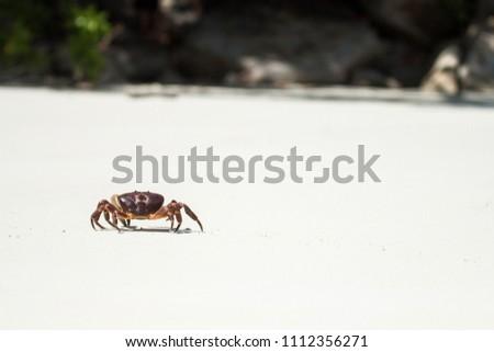Hairy leg crab at tachai island, chicken crab #1112356271