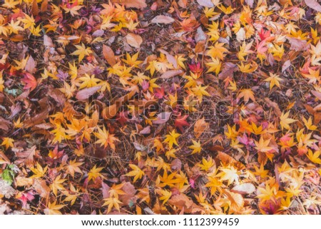 Multi-color falling leaf in autumn season, Japan. #1112399459