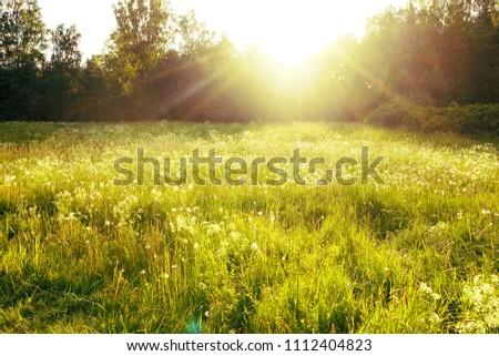 Beautiful meadow field in sunset time #1112404823