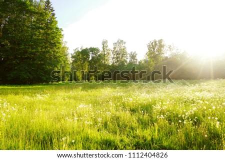 Beautiful meadow field in sunset time #1112404826