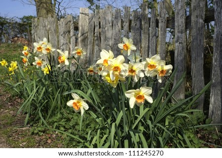 flowers with fence #111245270