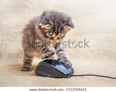 A little kitten is played with a computer mouse. Cat caught a mouse. Fun kids fun #1112504621