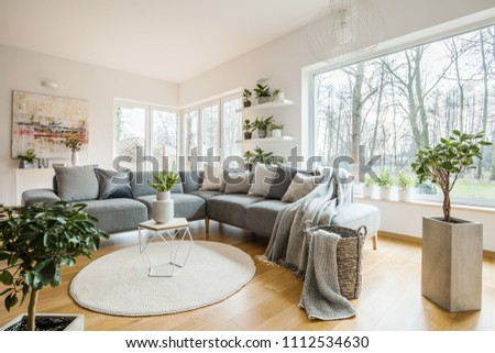 Fresh green plants in white living room interior with corner sofa with pillows and blanket, glass door and small table with tulips placed on round rug #1112534630