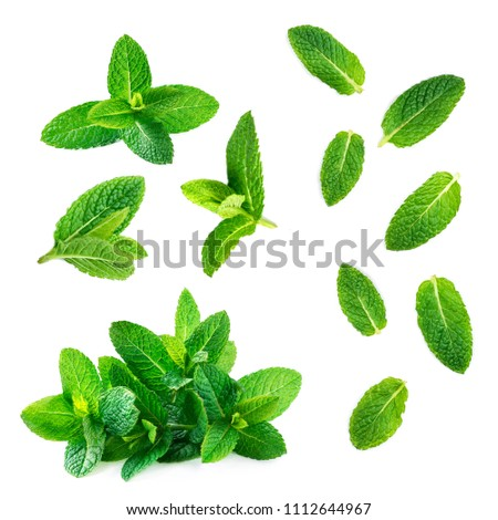 Fresh mint leaves collection  isolated on white background, top view. Close up of peppermint #1112644967