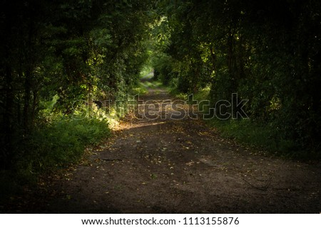 Irish country lane early evening in summer feeling of peacefulness and time for reflection #1113155876