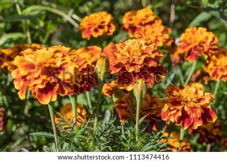garden flowers  #1113474416
