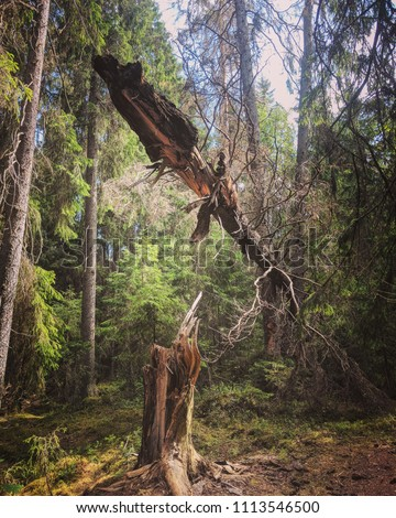 tree striked by lightning in forest #1113546500