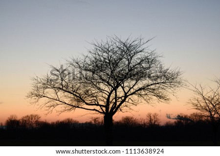 Silhouette of a tree in evening sky. #1113638924