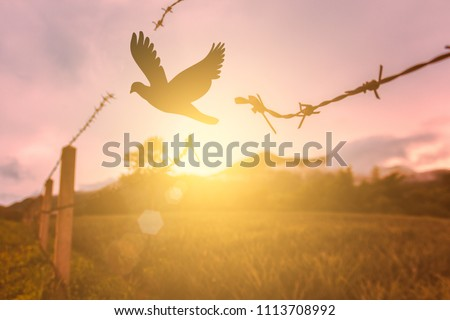 free bird enjoying nature on sunset background, hope concept / soft focus picture