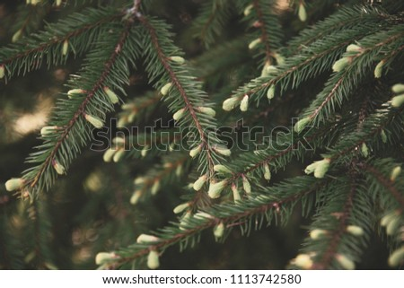 Needles of a young fir in the forest. Beautiful forest background #1113742580