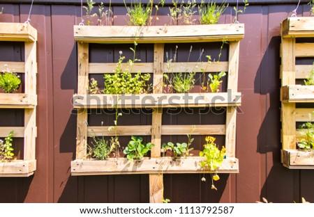 europalette flower boxes #1113792587