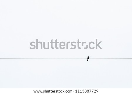 silhouette bird on a wire or electric line. Atmospheric photography. Concept