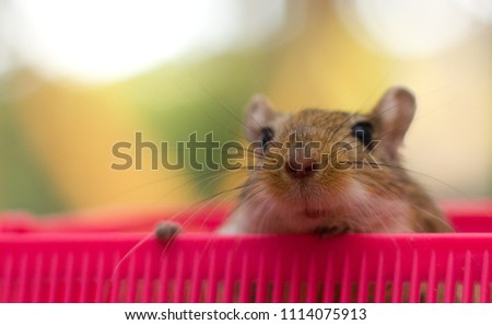 Gerbil is the cutest animal ever. They are extremely curious, fun, quick and loving.