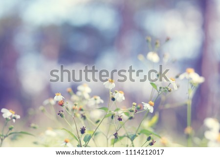 Abstract nature backgrounds  and wild flowers and plants. #1114212017
