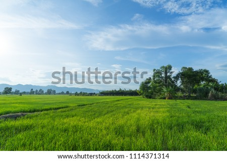 Beautiful green young rice field and wide cloudy sky in rainy season.  Natural scene. Farm land scenic North of Thailand. Agriculture land plot for sales. #1114371314