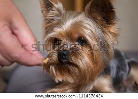 The dog eats a treat #1114578434