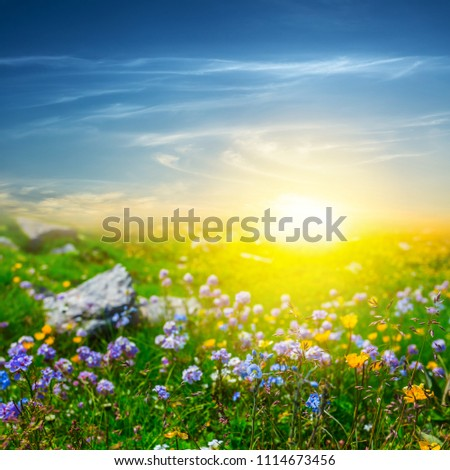 green summer prairie with flowers at the sunset #1114673456