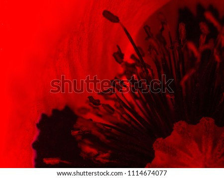 red poppy close up. Backlite abstract background #1114674077