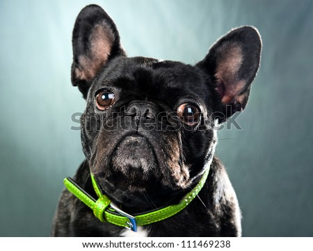 little dog with big eyes