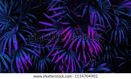 tropical leaf forest glow in the dark background. High contrast. #1114704902