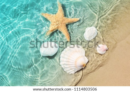 Starfish and seashell on the summer beach in sea water. Summer background. Summer time. Royalty-Free Stock Photo #1114803506