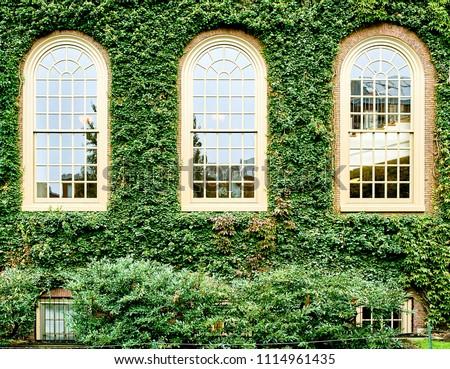 Ivy wall in Harvard at Cambridge, Massachusetts, USA. Royalty-Free Stock Photo #1114961435