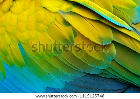 Close-up detail of parrot plumage. Green parrot Great-Green Macaw, Ara ambigua, detail of bird wing Wild nature in Costa Rica. Green, yellow and blue feathers. #1115125748