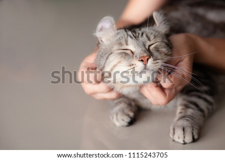 happy cat lovely comfortable sleeping by the woman stroking hand grip at . love to animals concept . #1115243705