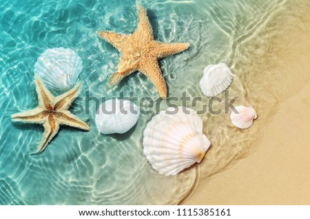 Starfish and seashell on the summer beach in sea water. Summer background. Summer time. #1115385161
