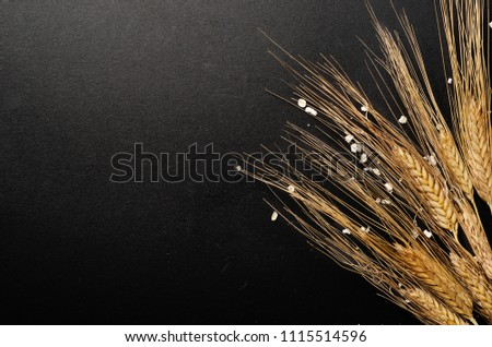 Dry ears of oats on a black background. Harvesting. Copy space #1115514596