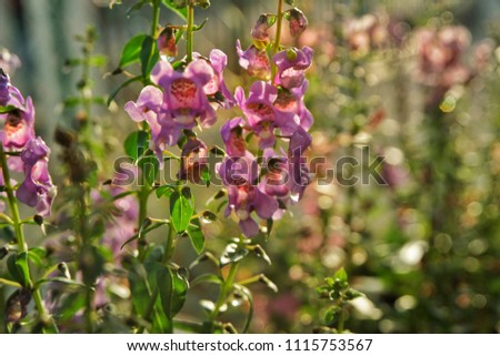 Closeup of purple flower with leaves under the sunlight and soft background. #1115753567