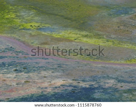 colourful wetland swamp plant algae over warm water surface in abandoned fish farm pond for global warming or polluted environment backdrop background use #1115878760