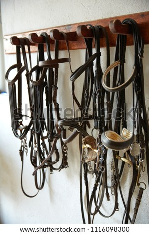 Horses tack in a row headgear halters bridles on white wall #1116098300