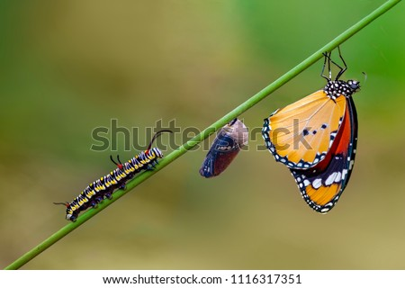 Differing stages of life from caterpillar to cocoon to butterfly #1116317351