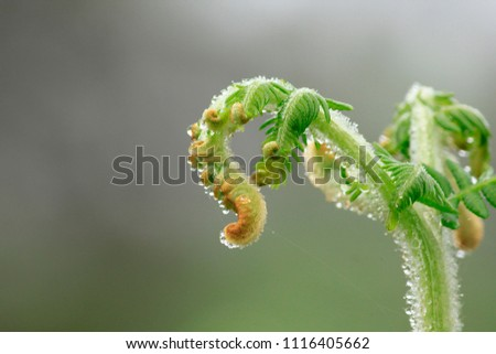 Soft shoots of ferns in nature. #1116405662