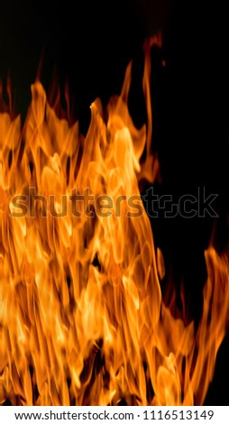 Fire flames on a black background #1116513149