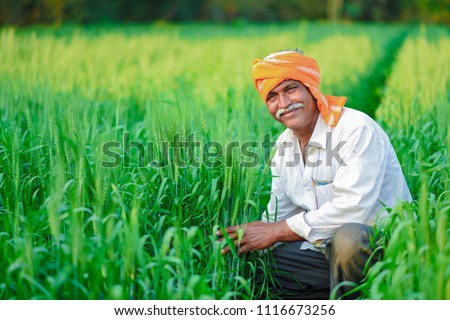 Indian farmer holding crop plant in his Wheat field #1116673256