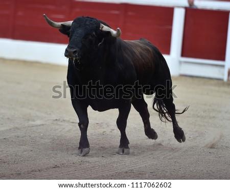 Bull in spain running in bullring #1117062602