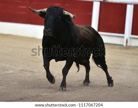 Spanish bull in bullring #1117067204