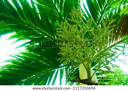 Tree branches and leaves are green on a white background. #1117250696