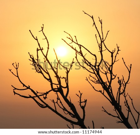 Sunrise through the branches #11174944