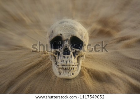 Human skull isolated on beach sand with focal zoom #1117549052